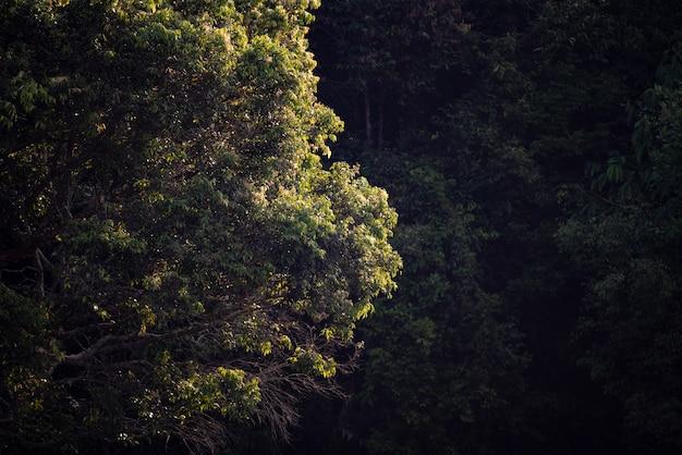 Drzewo w tropikalnym lesie