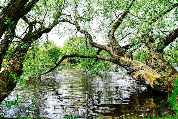 Drzewo w wodzie, malowniczy widok na jezioro w lesie, zielony park to czas letni