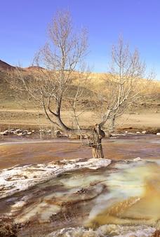 Drzewo w źródlanych wodach rzeki pozostałości kolorowego lodu w nurcie górskiej rzeki