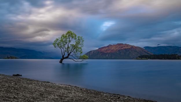 Drzewo wanaka w nowej zelandii