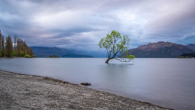 Drzewo wanaka z widokiem na jezioro