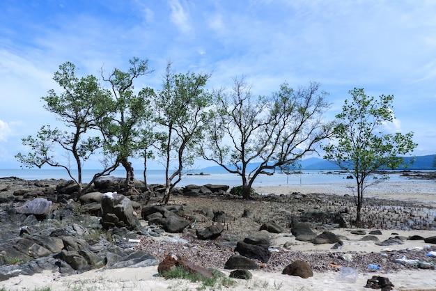 Drzewo wzdłuż plaży z błękitnym niebem w tajlandii.