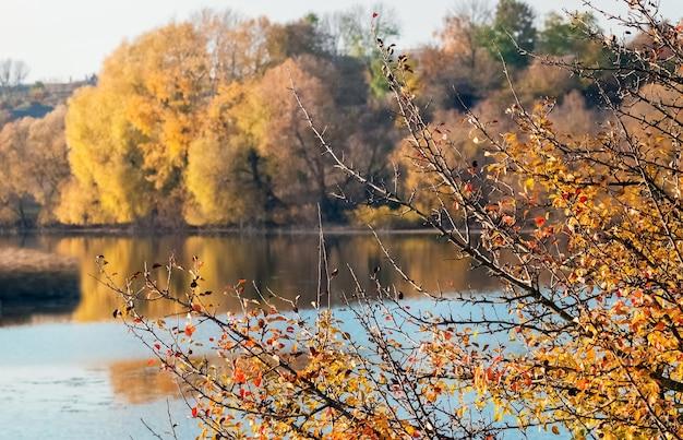 Drzewo z jasnymi pomarańczowymi i czerwonymi liśćmi nad rzeką, odbicie drzew w rzece
