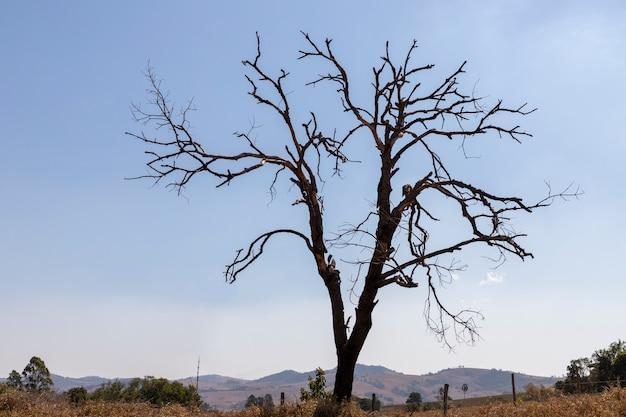 Drzewo z suchymi gałęziami i spalonymi sadzonkami.