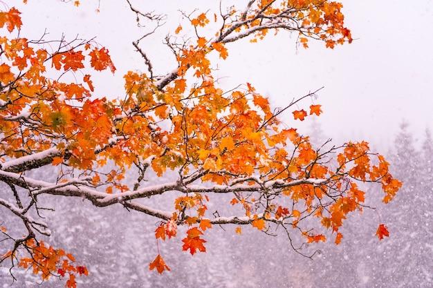 Drzewo z żółtymi liśćmi w górach