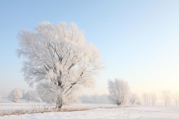 Drzewo zima mroźny w polu w słoneczny poranek