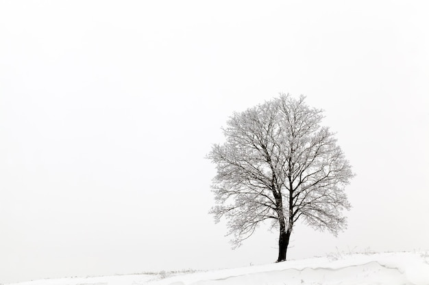 Drzewo zimą s