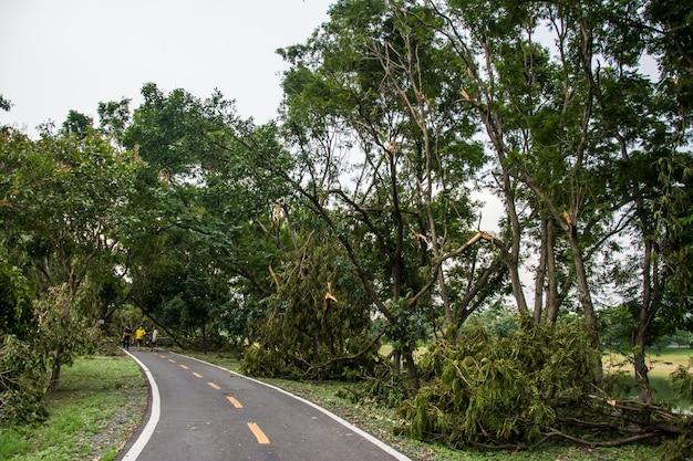 Drzewo zostało zniszczone przez intensywność burzy