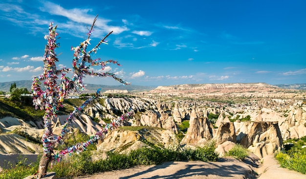 Drzewo życzeń w dolinie goreme w kapadocji, turcja