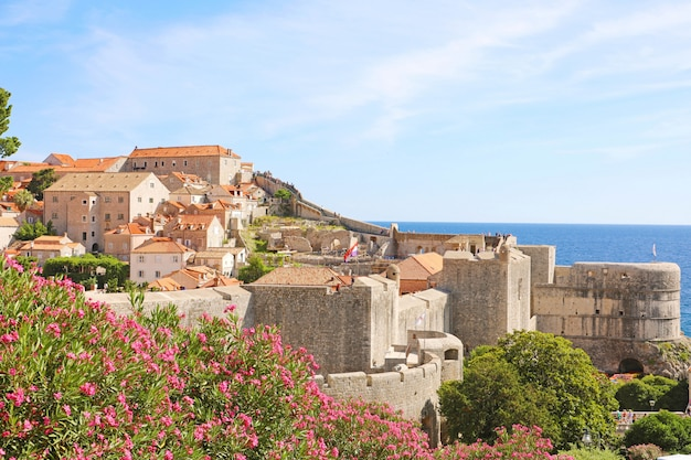 Dubrownik stare mury miejskie z kwiatami, chorwacja, europa
