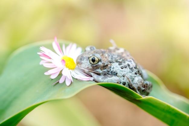 Dumpy frogs siedzi na kwiatek. piękna karta lato.