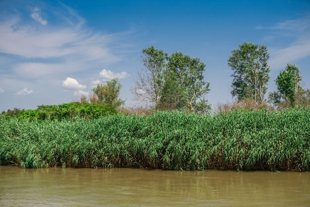 Dunaj w pobliżu miejscowości vilkovo, ukraina