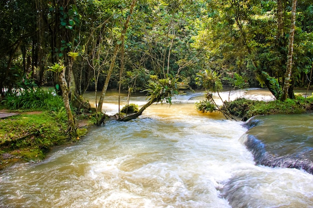 Dunns's river falls na jamajce w dunn's river falls park