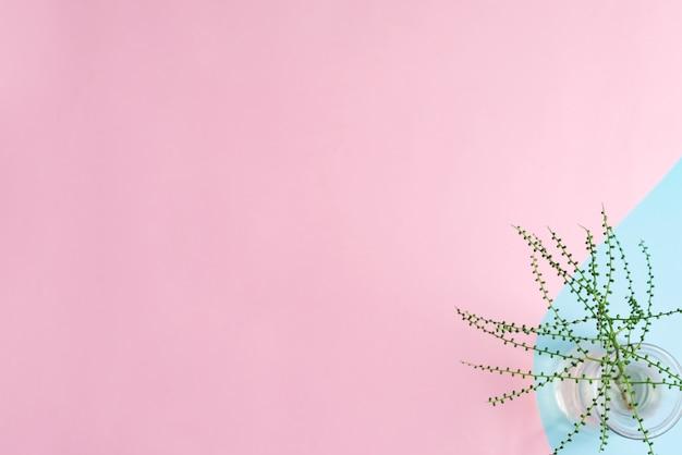 Duotone pastelowe różowe niebieskie tło dekoracyjne z zielonym liściem tropikalnym w szklanym wazonie.