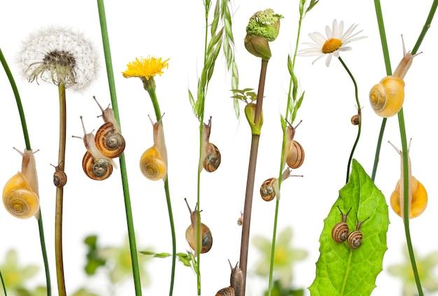 Duszpasterska kompozycja kwiatów i ślimaków na białym tle