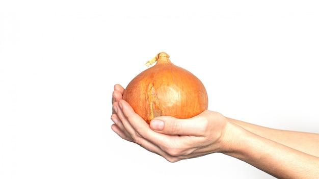 Duża cebuli głowa w ręce na białym tle.