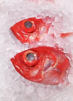 Duża czerwonooka makrela lub ryba kinmedai zamrożona w lodzie sprzedawana na targu owoców morza.