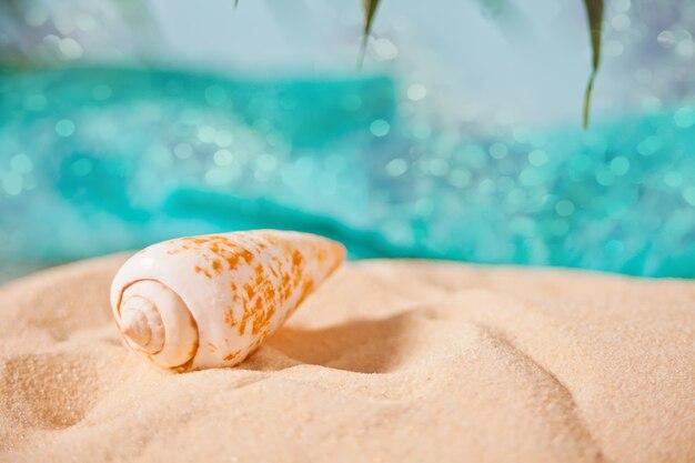 Duża denna skorupa na białym piasku pod palmowym liściem