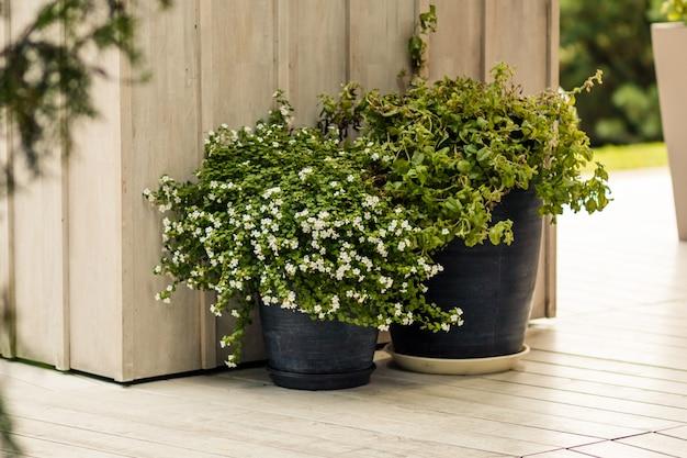Duża doniczka na dziedzińcu ogrodowym. patio na zewnątrz elementów dekoracyjnych. duża doniczka z małą zieloną rośliną. dekoracja uliczna rośliny w mieście