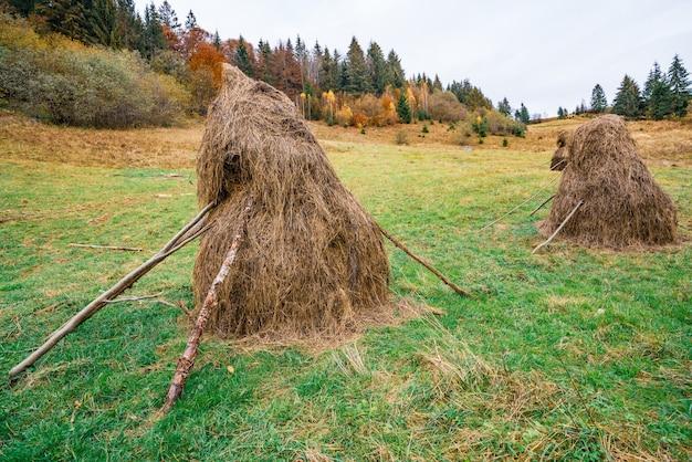 Duża ilość stogów z suchym sianem na zielonej łące z mokrą i świeżą trawą przy pochmurnej szarej pogodzie