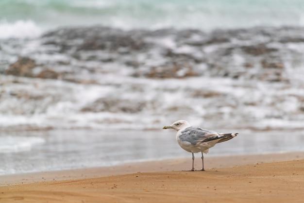 Duża mewa na brzegu morza