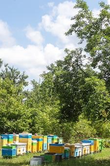 Duża pasieka z wielokolorowych uli wielokadłubowych w ogrodzie przeciw błękitne niebo. orientacja pionowa.
