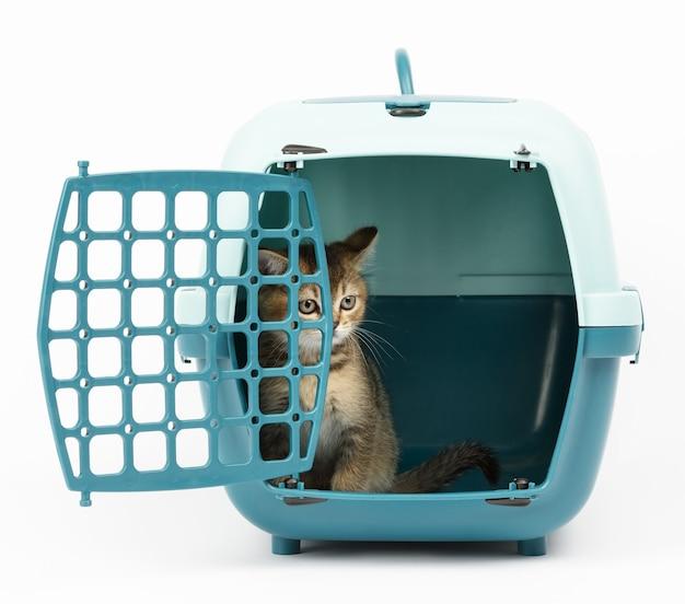 Duża plastikowa klatka transportowa dla kotów i psów na białym tle, wewnątrz kotka znajduje się szkocki prost