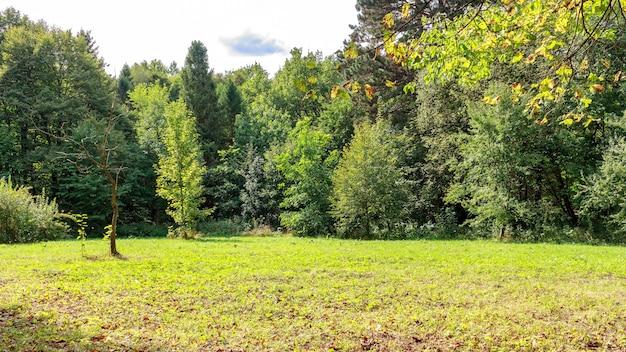 Duża polana w parku, pokryta trawą wśród drzew iglastych i liściastych