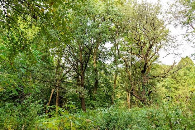Duża polana w parku, zadaszona trawa wśród drzew iglastych i drzew liściastych w jesienny dzień