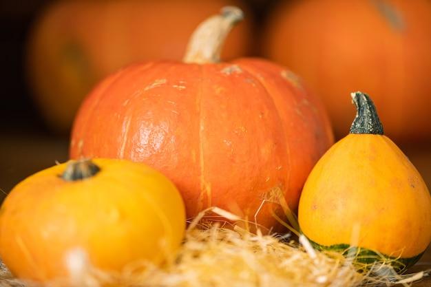 Duża pomarańczowa dynia i dwie mniejsze żółte dynie na stosie słomy tworząc halloweenową kompozycję