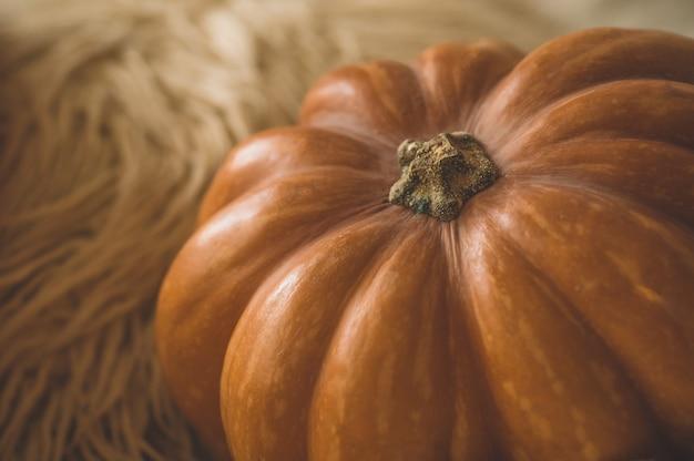 Duża pomarańczowa dynia na ciepłym swetrze. dynia w miękkim swetrze. tło dziękczynienia - pomarańczowe dynie.