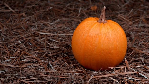 Duża pomarańczowa świeża bania na sianie. święto dziękczynienia z copyspace