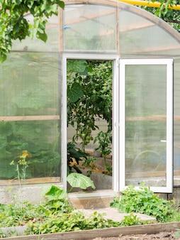 Duża szklarnia z półokrągłego poliwęglanu z otwartymi drzwiami