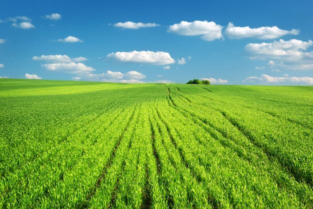 Duża zielona łąka