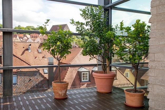 Duże ceramiczne donice z drzewami cytrynowymi na przeszklonym balkonie z widokiem na stare niemieckie miasto.