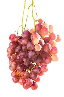 Duże czerwone winogrona na białym tle