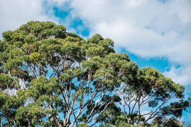 Duże drzewo i błękitne niebo