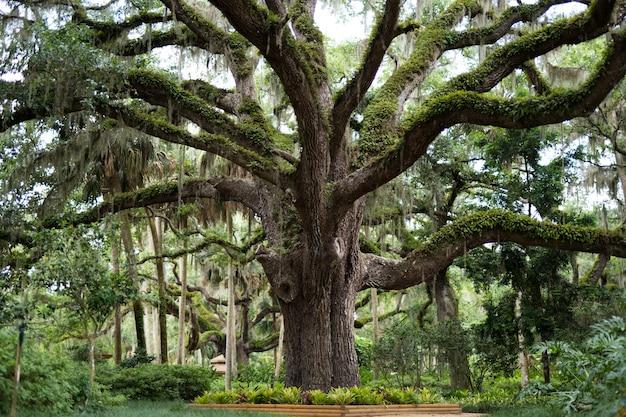 Duże drzewo porośnięte zielenią i mchami w parku