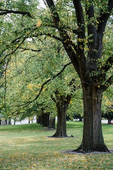 Duże drzewo w parku