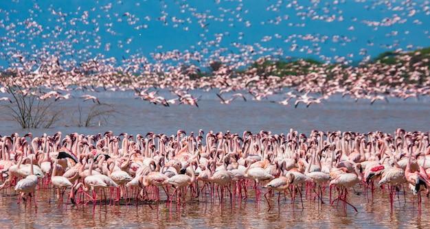 Duże grupy flamingów na jeziorze