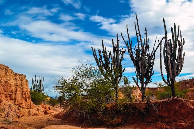 Duże kaktusy na skałach na pustyni tatacoa w kolumbii pod jasnym pochmurnym niebem