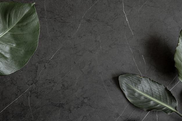 Duże naturalne tropikalne liście na ciemnym marmurze powierzchni kopii.