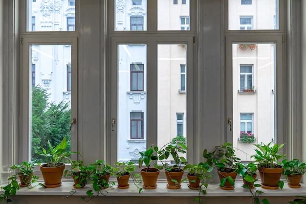 Duże okno z wewnętrznymi kwiatami na parapecie