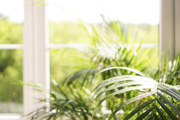 Duże okno ze słonecznym światłem i zieloną rośliną palmową - lato w tle