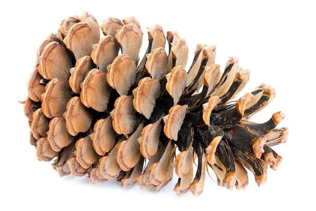 Duże otwarcie szyszki cedrowe na białym tle