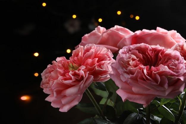 Duże różowe kwiaty w ciemności