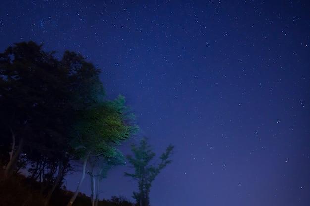 Duże zielone drzewa w lesie pod niebieskim, ciemnym niebem z wieloma jasnymi gwiazdami.