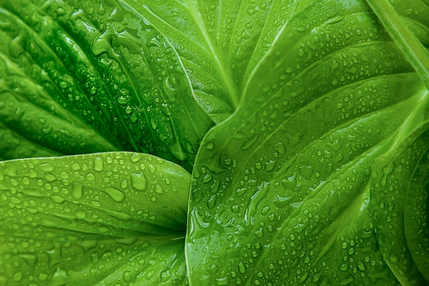 Duże zielone liście tekstura tło