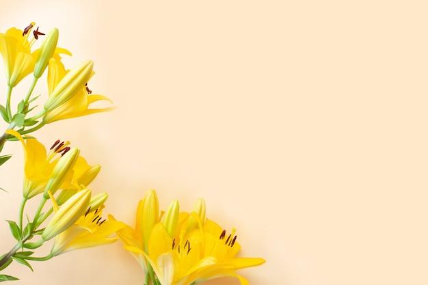Duże żółte kwiaty lilii na jasnym tle.