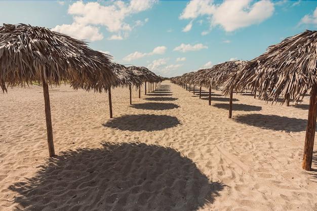 Dużo krytych strzechą osłon przeciwsłonecznych. parasole stoją w rzędzie na piasku w kurorcie na plaży varadero na kubie